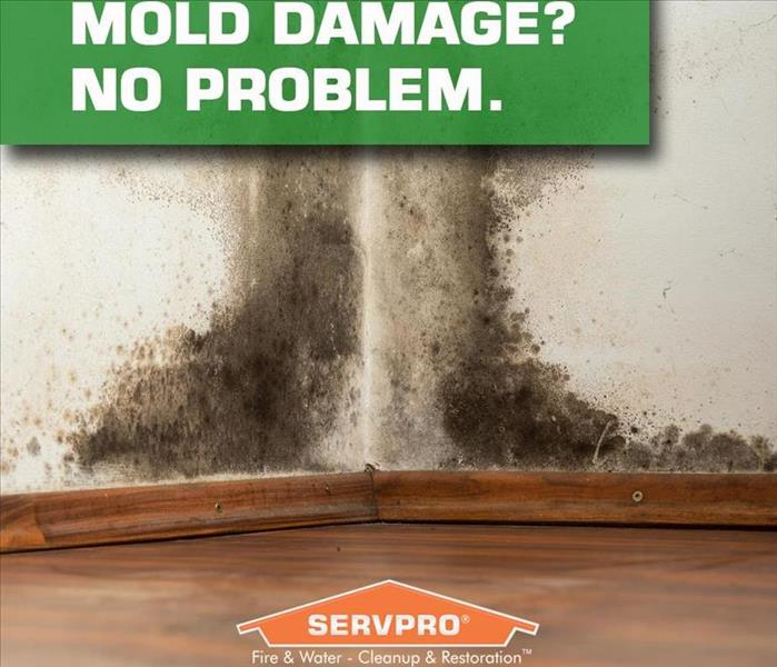 Mold Remediation Venice Florida Residents: Follow These Mold Safety Tips If You Suspect Mold