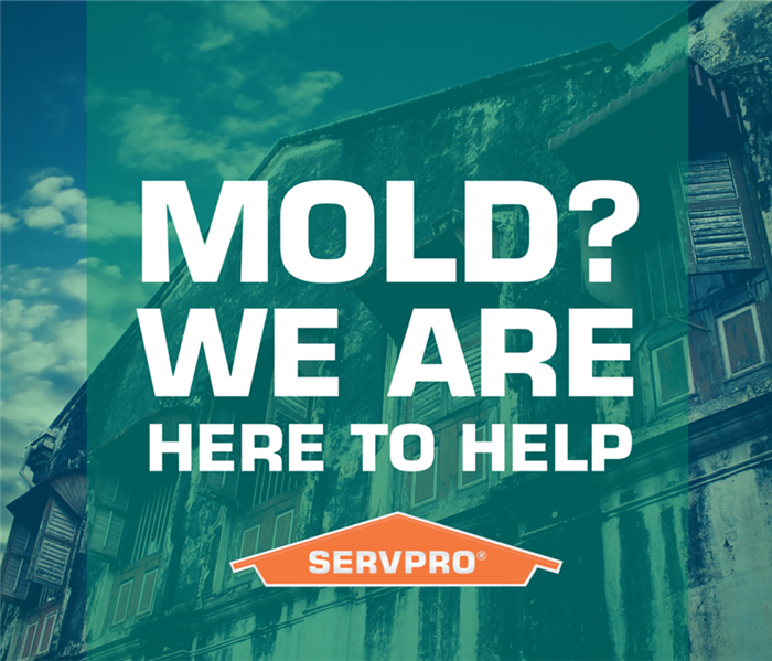 Mold Remediation  Does Your Venice Florida Home Have A Mold Problem?